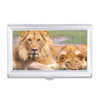 Pair of African Lions, Panthera leo, Tanzania Business Card Holder