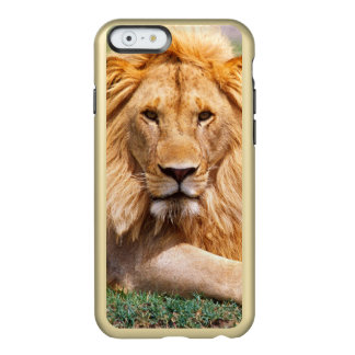 Pair of African Lions, Panthera leo, Tanzania Incipio Feather® Shine iPhone 6 Case