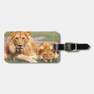 Pair of African Lions, Panthera leo, Tanzania Luggage Tag