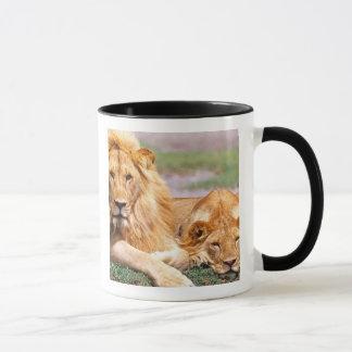 Pair of African Lions, Panthera leo, Tanzania Mug