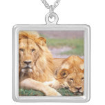 Pair of African Lions, Panthera leo, Tanzania Square Pendant Necklace