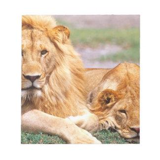 Pair of African Lions, Panthera leo, Tanzania Notepad