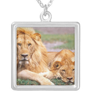 Pair of African Lions, Panthera leo, Tanzania Silver Plated Necklace