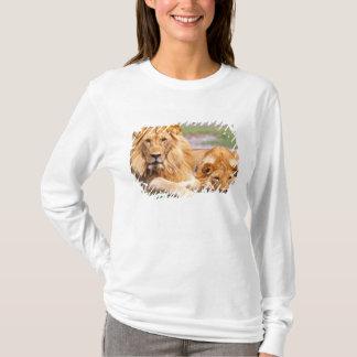 Pair of African Lions, Panthera leo, Tanzania T-Shirt