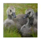 Pair of Baby Canadian Geese Goslings tile