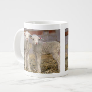 Pair of commercial Targhee Lambs Jumbo Mug