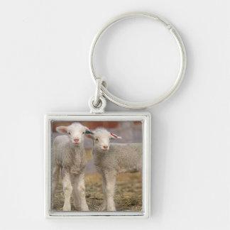 Pair of commercial Targhee Lambs Key Ring