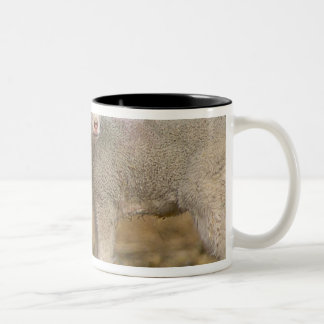 Pair of commercial Targhee Lambs Mugs