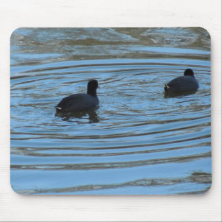 Pair of Coots Swimming on Lake Mouse Pad