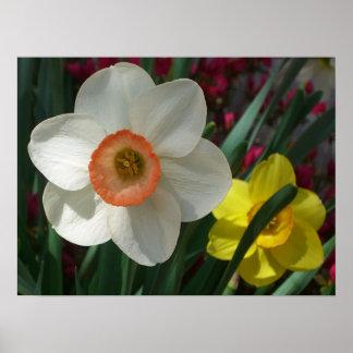 Pair of Daffodils Print