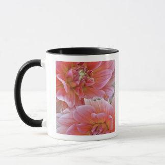 Pair of Dahlia flowers, Dahlia spp. , Mug