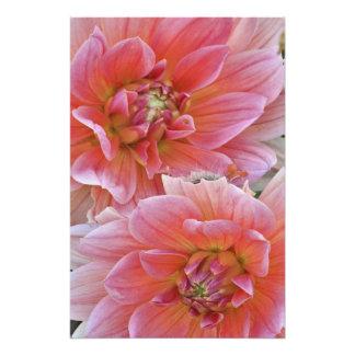 Pair of Dahlia flowers, Dahlia spp. , Photo Art