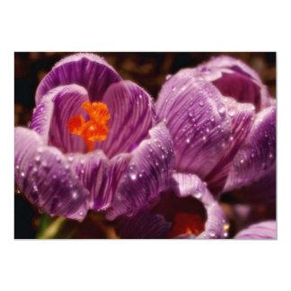 "Pair of dewy crocuses, soft-focus  flowers 5"" x 7"" invitation card"