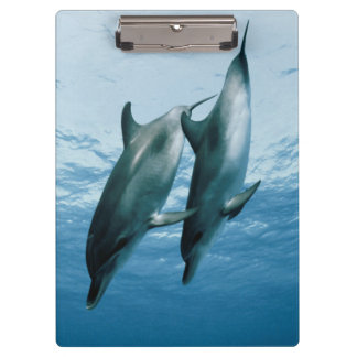 Pair of Dolphins Clipboard