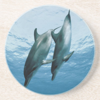 Pair of Dolphins Coaster