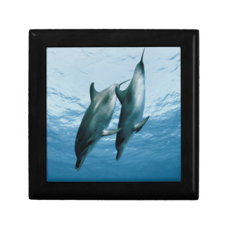 Pair of Dolphins Gift Box
