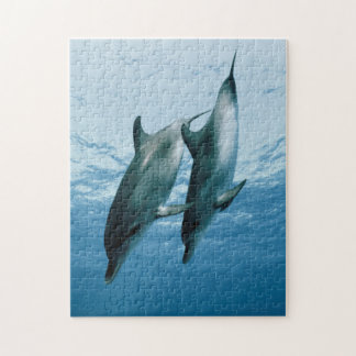 Pair of Dolphins Jigsaw Puzzle