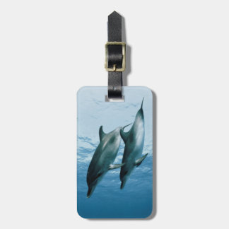 Pair of Dolphins Luggage Tag