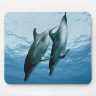 Pair of Dolphins Mouse Mat