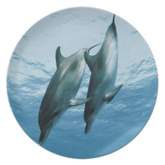 Pair of Dolphins Plate