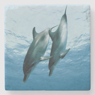 Pair of Dolphins Stone Coaster