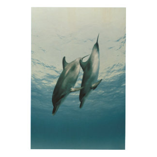 Pair of Dolphins Wood Print