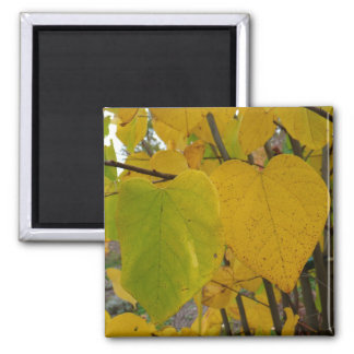 Pair of Fall Redbud Leaves Autumn Photography Square Magnet