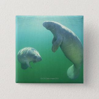 Pair of florida manatees swimming 15 cm square badge