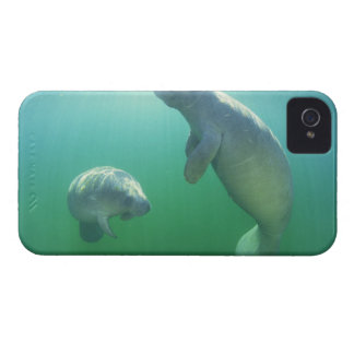 Pair of florida manatees swimming iPhone 4 Case-Mate cases