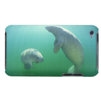 Pair of florida manatees swimming iPod touch covers