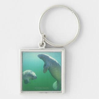 Pair of florida manatees swimming key ring