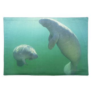 Pair of florida manatees swimming placemat