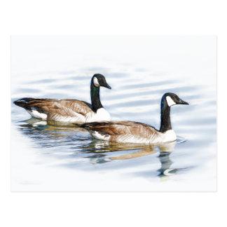 Pair of Geese Postcard