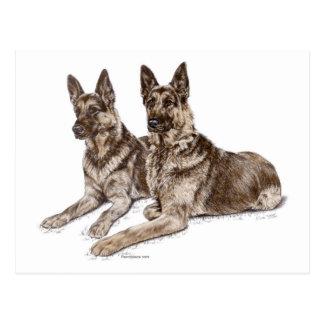 Pair of German Shepherd Dogs Postcard