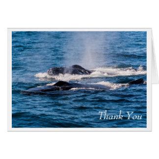 Pair of Humpback Whales Greeting Card