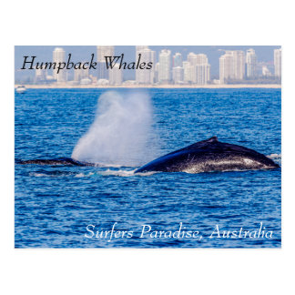 Pair of Humpback Whales Postcard