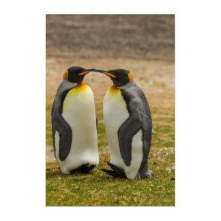 Pair of King Penguins, Falklands Acrylic Print