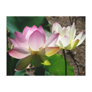 Pair of Lotus Flowers I Canvas Print