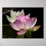 Pair of Lotus Flowers II Poster