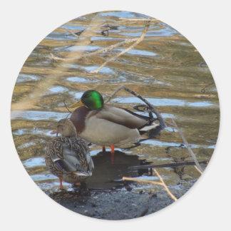 Pair of Mallard Ducks on Shore's Edge Round Stickers