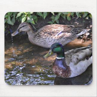 Pair of Mated Mallard Ducks Mouse Pad