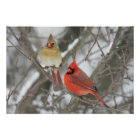 Pair Of Northern Cardinals Poster