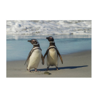 Pair of penguins on the beach acrylic wall art