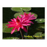 Pair of Pink Water Lilies postcard #128NW  0128