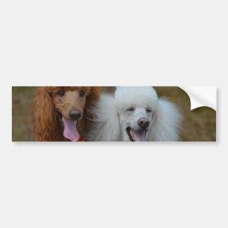 Pair of Poodles Bumper Sticker