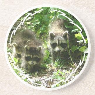 Pair of Raccoons Coasters