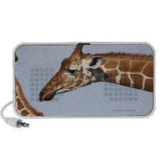Pair of Reticulated Giraffes (Giraffa Mini Speaker