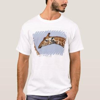 Pair of Reticulated Giraffes (Giraffa T-Shirt