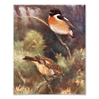 Pair of Stonechats Artwork Photograph