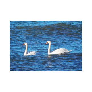 Pair of swans. canvas print